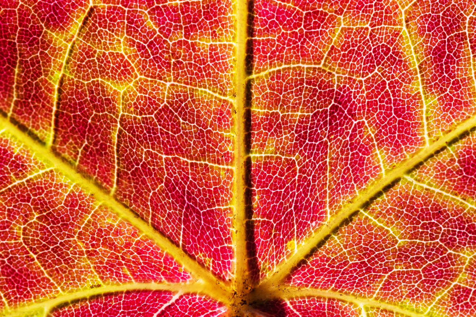 Autumn: up close and personal