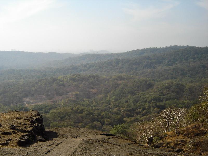 200602-6893 Sanjay Gandhi National Park - Mumbai, February 19, 2006