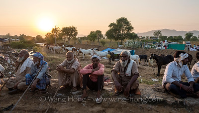 Horsemen at sunset, Pushkar Camel Fair, November 2019.