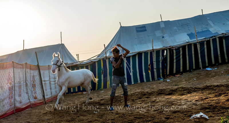 Man training his horse at Pushkar Camel Fair, November 2019.