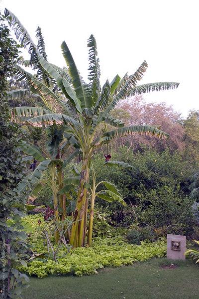 Garden at Khem Vilas