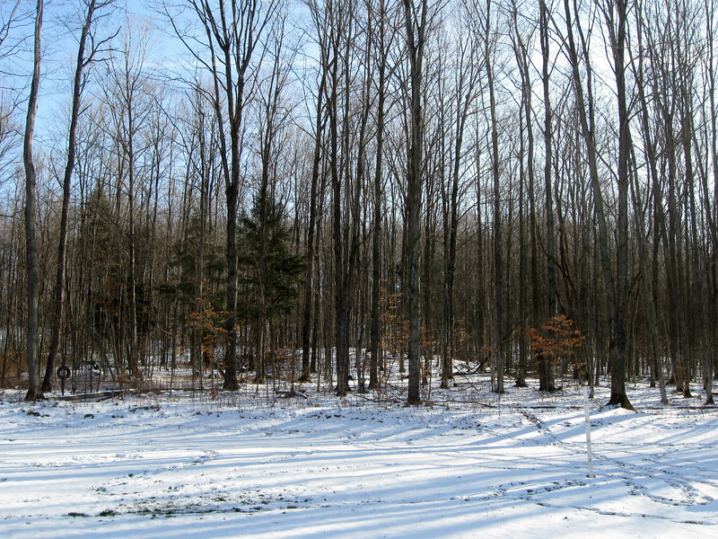 "12-11-11  Winter's over...<i>again</i>... Time:  1:30pm Temp:  39'F Snow Depth:  2"" Snow to Date:  8.0"" Snow to Date Last Year:  17"""