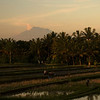 Rice field near Ubud at sunset, Mt. Agung at the back.