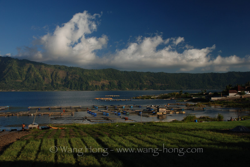 Garlic field around Mr. Batur caldera lake in Kintamani