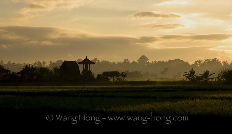 Rice field and village temple at sunrise near Ubud.