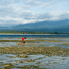 Colleting some sea creatures at low tide, sunset, Gili Air