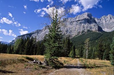 Wilson mountain.  Located near   Saskatchewan crossing, south Icefields parkway,  Alberta Canadia.  1998.