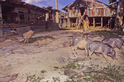The tribe subsided on pork, vegetables and fruits picked from their garden and from the jungle.   Each meal we had was excellent.  We stayed here three days and two nights.