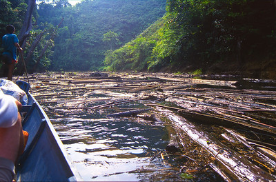 Once across Batang Ai Lake, we entered the Batang Ai river.  An impossible  log jam chocked the river for about two hundred yards, forcing the boatman to pole his way through.
