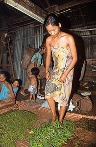 Inside the long house, a Iban lady threshes pepper with her feet.   Batang Ri river, Sarawak, Malaysia.