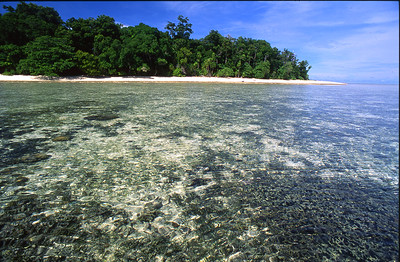 Sipadan Island is possibly one quarter mile in diameter, but surrounded by miles of pristine coral reef.  Aquatic animals here are abundant.  Please browse wildlife>aquatic to view underwater photos.    Sipadan island in the Celebes Sea, Malaysia.  1996