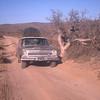 On road west of Santa Cataria.  Elephant tree on right are common in Baja.  Baja California, Mexico  1974