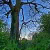 Cavehill tree<br /> Belfast