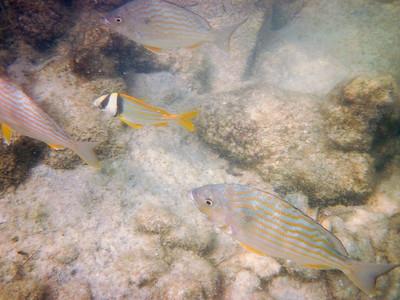 snorkeling at coral bay-1.jpg