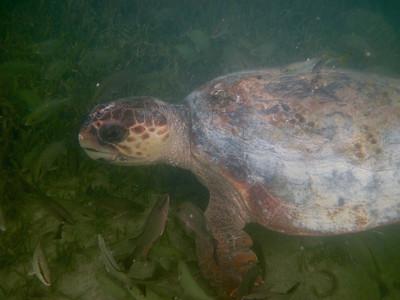 snorkeling at coral bay-8.jpg