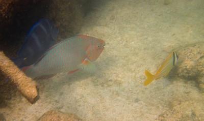 snorkeling at coral bay-11.jpg