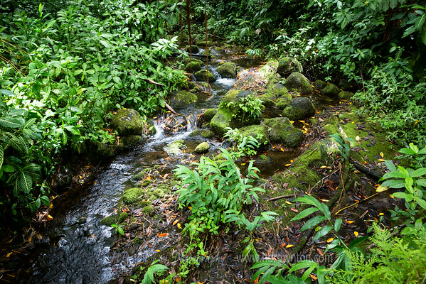 Tiny Stream -- Akaka Falls State Park