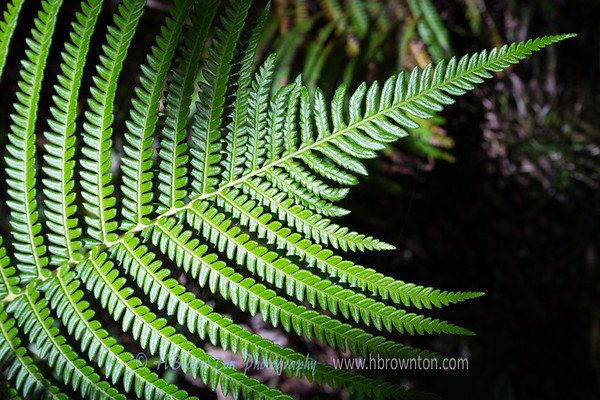 Fern on the Trail