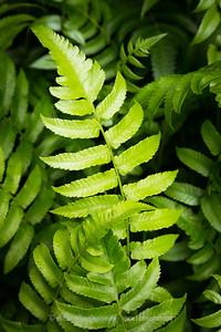 Amongst the Ferns...