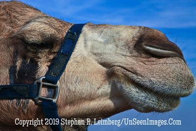 Camel Profile web