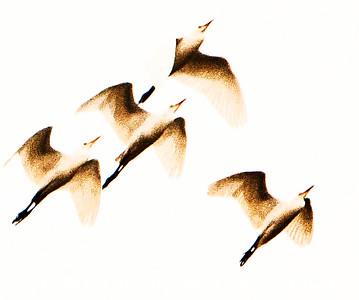Birds in Flight web