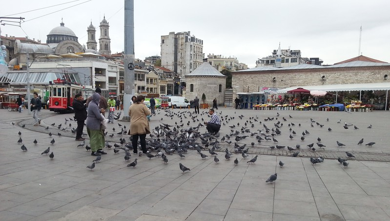 Feeding pigeons in Istanbul