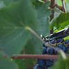 ....a visit to the vineyard...