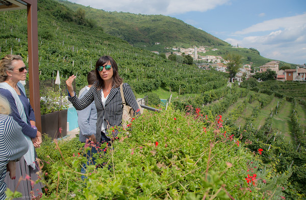 Elvira Bortolomiol talks about the beloved land where harvest is in full swing.