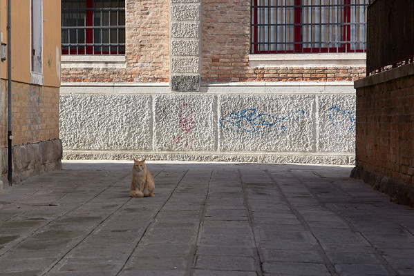 Italy, Venice, Wildlife SNM