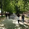 Lucca - Botanic Garden Trees
