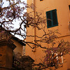Lucca Orange Building with tree 2