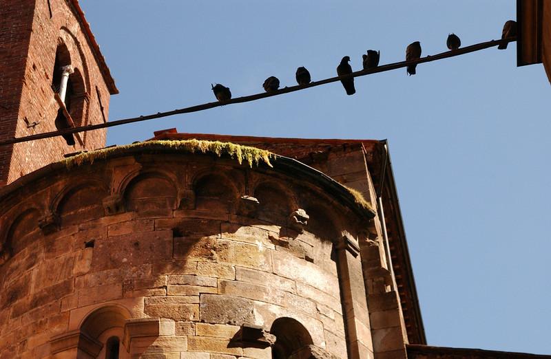 Lucca - Via Beccheria Birds on Wire 2