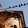 Lucca - Via Beccheria Birds on Wire 2