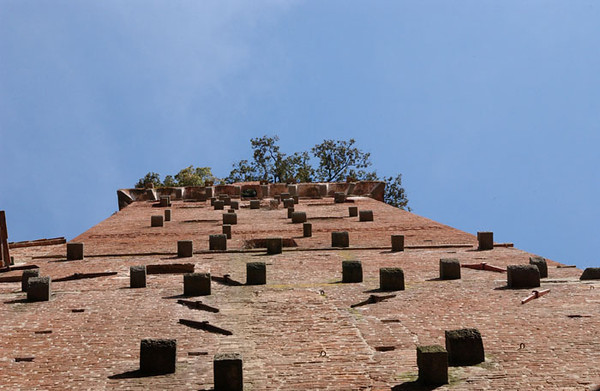 Lucca - Looking Up at Torre Guinigi