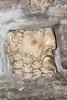 378-6327 Basilica di San Clemente al Laterano, Rome, September 11, 2013