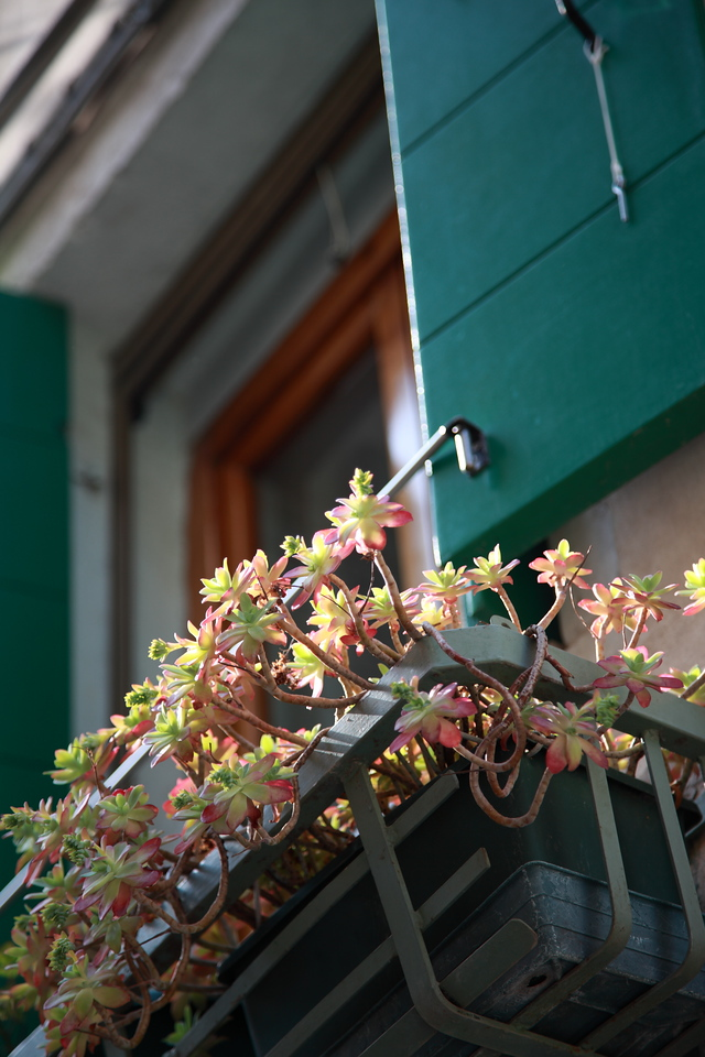 Windowbox with succulents in Venice