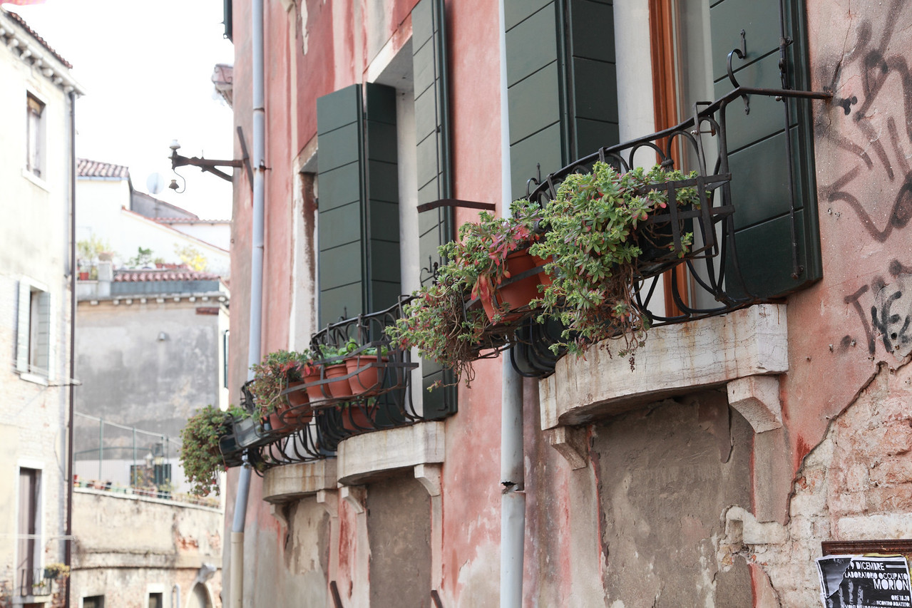 Windowboxes in Venice