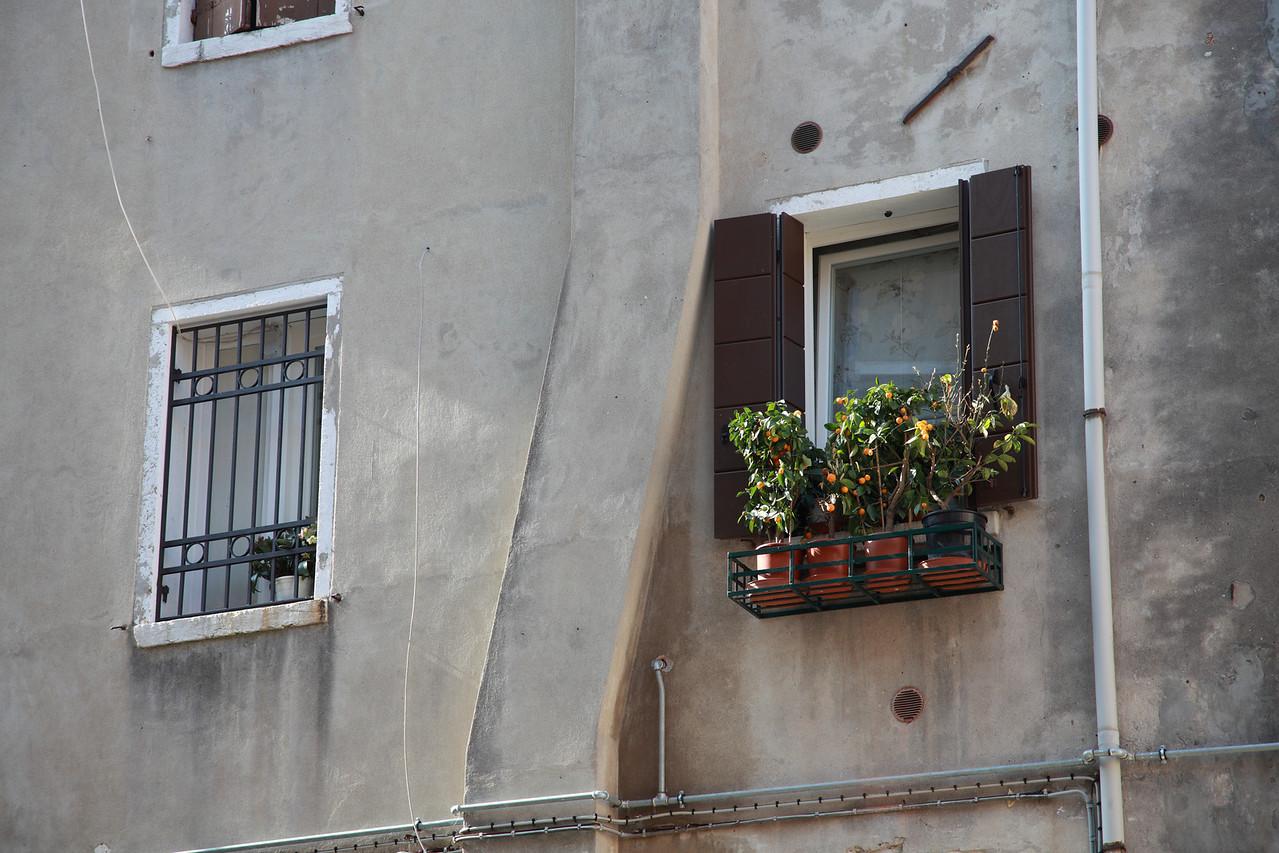Windowbox in Venice, Italy