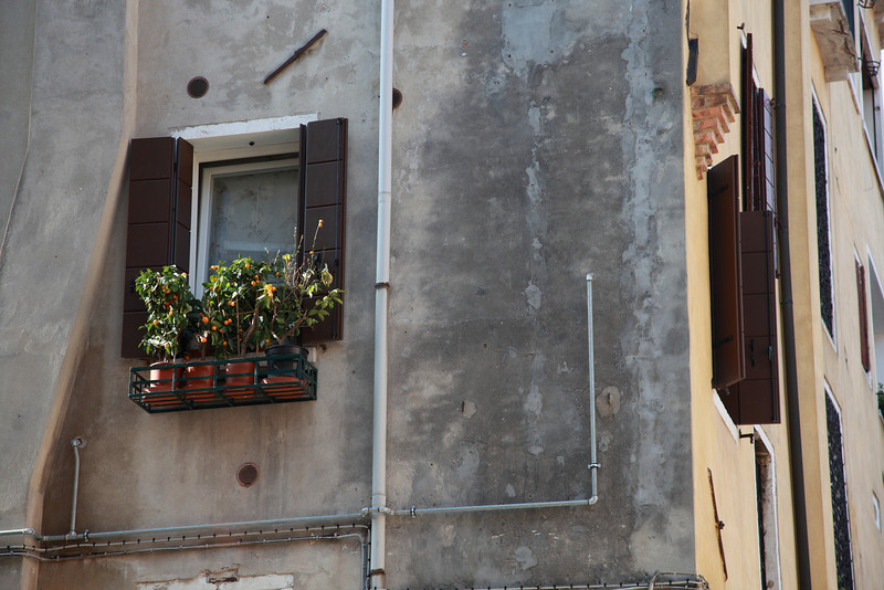 Windowbox in Venice, Italy