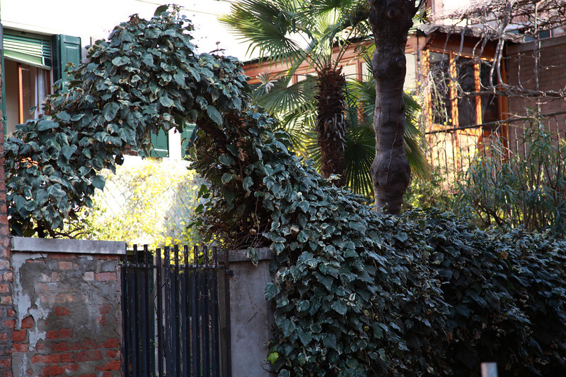 Ivy arches over a gate in Venice, Italy