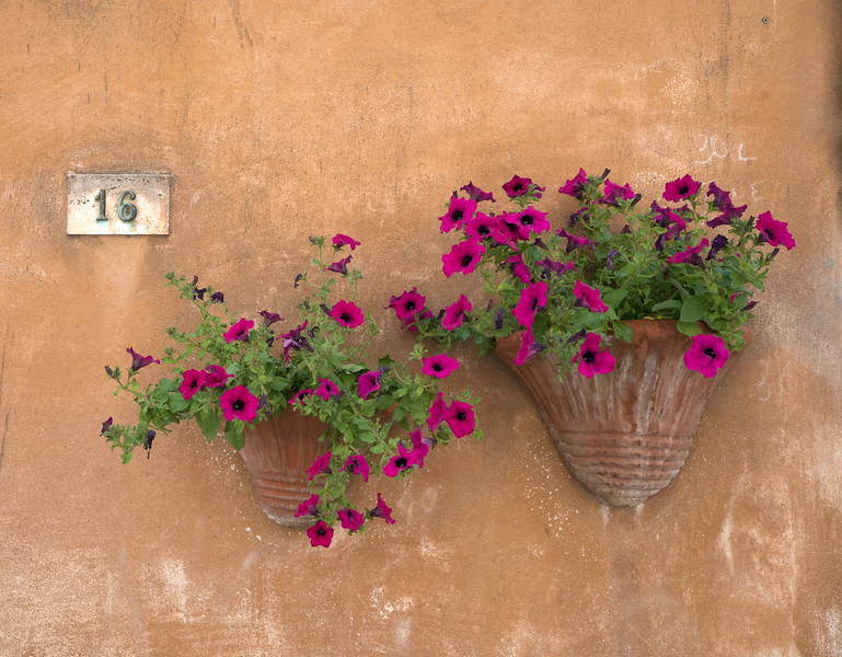 Petunias at Number 16