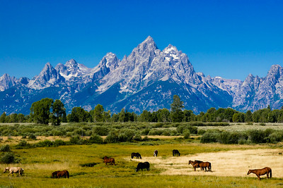 Jackson Hole - Yellowstone