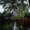 """<a href=""""http://www.buhla.de/Foto/Konica/eT2Haupt.html"""" target=""""_blank"""">Konica AutoReflex T2</a> & 28mm f/3.5 / Kodak Portra 400VC"""