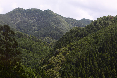 View from train on the ride in to Koyasan