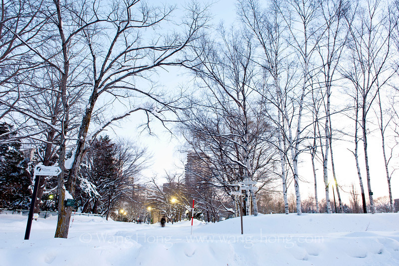 Nakajima Park in Sapporo. Pathways have been dug from very thick snow on the ground. 扎幌中岛公园。人行的小道都是从厚厚的积雪中挖出来的。