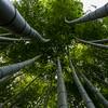 Arashiyama, The Bamboo Forest