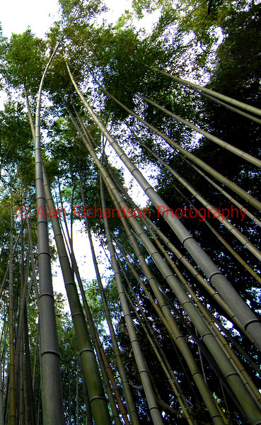 Nagasaki_Japan_AR Pitillock Farm_AR