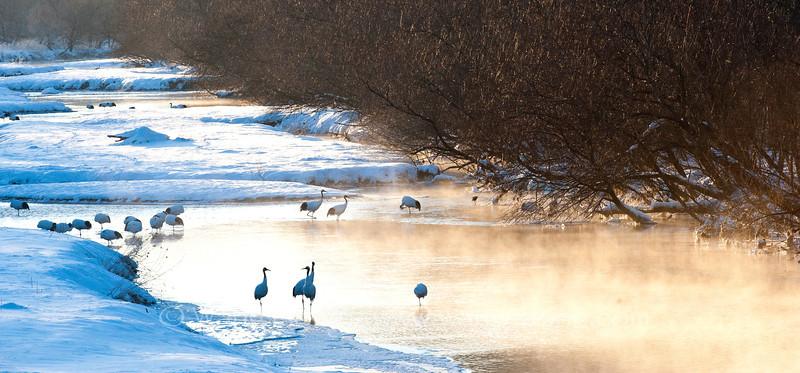 Cranes in the river, seen from Otowa Bridge at sunrise.