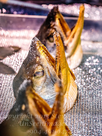 Fish Mouths - Copyright 2017 Steve Leimberg - UnSeenImages Com _DSF4784