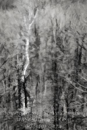 Ghost Tree - Through Glass and Rain - Color - Copyright 2017 Steve Leimberg UnSeenImages Com _DSF4745